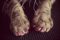 Houd uw kat gedurende 3 minuten in de gaten zodat de lijm kan uitharden.
